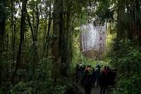 Tane Mahuta, Giant Kauri tree in Waipoua Rainforest, North Island, New Zealand Fine Art Print