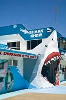 Australia, Queensland, Hervey Bay, Shark Show by Walter Bibikow - various sizes