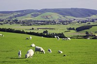 Farmland at Milburn, South Otago, South Island, New Zealand by David Wall - various sizes - $32.49