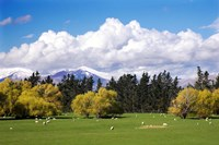 Farmland in Southland, South Island, New Zealand by David Wall - various sizes - $32.49