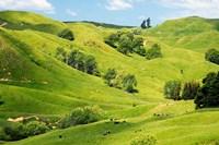 Farmland near Gisborne, New Zealand by David Wall - various sizes - $32.49