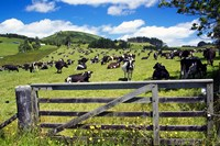Gate and Dairy Farm near Kaikohe, Northland, New Zealand by David Wall - various sizes - $32.49