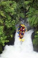 Raft, Tutea's Falls, Okere River, near Rotorua, New Zealand by David Wall - various sizes