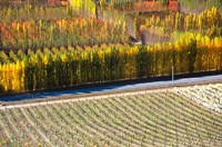 Autumn in Mt Difficulty Vineyard, Central Otago, New Zealand by David Wall - various sizes