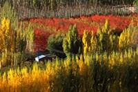Autumn Colours, Bannockburn, Central Otago, New Zealand by David Wall - various sizes