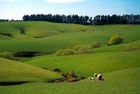 Farmland Near Clinton, New Zealand by David Wall - various sizes