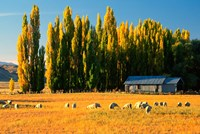 Farmland, Maniototo, Central Otago, New Zealand by David Wall - various sizes - $37.49