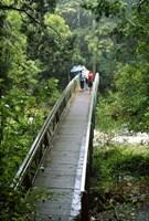 Bridge Below Whangarei Falls, Northland, New Zealand by David Wall - various sizes