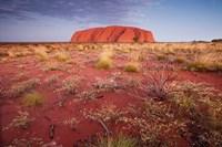 Australia, Uluru-Kata Tjuta NP, Outback, Ayers Rock by Paul Souders - various sizes