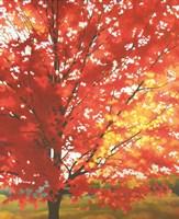 Red Tree by Patrice Procopio - various sizes