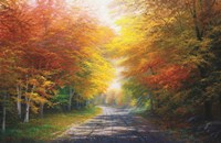 October Glow Fine Art Print