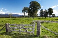 Gate and Farmland near Fox Glacier, West Coast, South Island, New Zealand by David Wall - various sizes - $39.99