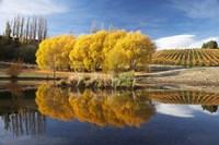 Autumn Vineyard, Bannockburn Inlet, Lake Dunstan, Central Otago, South Island, New Zealand by David Wall - various sizes