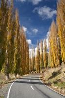 Autumn, Rangitikei District, North Island, New Zealand by David Wall - various sizes