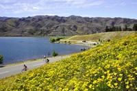 Californian Poppies and Cyclists, Lake Dunstan, South Island, New Zealand by David Wall - various sizes