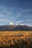 Farm Scene, Mt Ruapehu, North Island, New Zealand Fine Art Print