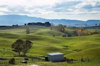Farmland, Napier, Taihape Road, Hawkes Bay, North Island, New Zealand by David Wall - various sizes - $40.99