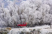 Four Wheel Drive and Hoar Frost, Sutton, Otago, South Island, New Zealand by David Wall - various sizes, FulcrumGallery.com brand