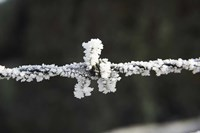 Frosty Barbed Wire, Otago, South Island, New Zealand by David Wall - various sizes, FulcrumGallery.com brand