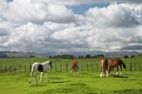 Horses, Farmland, Te Kauwhata, North Island, New Zealand by David Wall - various sizes - $40.99