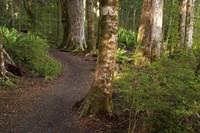 Kepler Track, Fjordland National Park, South Island, New Zealand by David Wall - various sizes