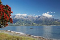 Pohutukawa Tree, Marlborough, South Island, New Zealand by David Wall - various sizes - $40.99