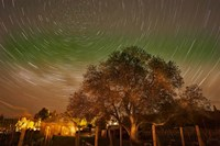 Star Trails Over Walnut Tree, Domain Road Vineyard, Central Otago, South Island, New Zealand by David Wall - various sizes - $40.99