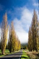 Autumn Colour and Wanganui, Raetihi Road, near Wanganui, North Island, New Zealand by David Wall - various sizes