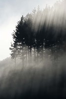 Early Morning Mist and Trees, State Highway 4 near Wanganui, North Island, New Zealand Fine Art Print