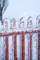 Frost on Gate, Mitchell's Cottage and Hoar Frost, Fruitlands, near Alexandra, Central Otago, South Island, New Zealand by David Wall - various sizes, FulcrumGallery.com brand