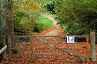 Gate and Oak Leaves, Te Wera Arboretum, Forgotten World Highway, Taranaki, North Island, New Zealand by David Wall - various sizes - $40.99