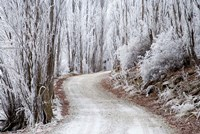 Hoar Frost and Road by Butchers Dam, South Island, New Zealand (horizontal) by David Wall - various sizes, FulcrumGallery.com brand