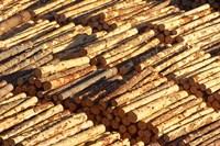 Log Stacks, Marlborough Sounds, South Island, New Zealand by David Wall - various sizes