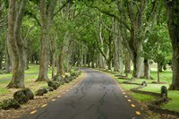Twin Oaks Drive, Paths, North Island, New Zealand by David Wall - various sizes
