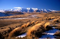 Tussocks and Hawkdun Range, Central Otago, New Zealand Fine Art Print