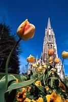 First Church, Dunedin, New Zealand by David Wall - various sizes, FulcrumGallery.com brand