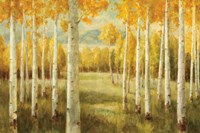 Aspens by Danhui Nai - various sizes