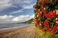 Beach, Pohutukawa, Thornton Bay, No Island, New Zealand by David Wall - various sizes - $45.99