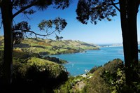 Careys Bay, Otago Harbour, South Island, New Zealand by David Wall - various sizes