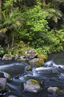 New Zealand, Hatea River, Whangarei Falls, Northland by David Wall - various sizes, FulcrumGallery.com brand