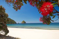 Pohutukawa Tree in Bloom and New Chums Beach, North Island, New Zealand Fine Art Print