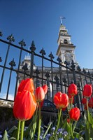 Red Tulips & Municipal Chambers Clock Tower, Octagon, South Island, New Zealand Fine Art Print