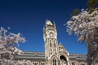 Spring, Clock Tower, Dunedin, South Island, New Zealand (horizontal) by David Wall - various sizes