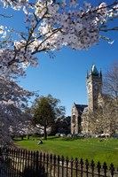 Spring, Clock Tower, Dunedin, South Island, New Zealand (vertical) by David Wall - various sizes