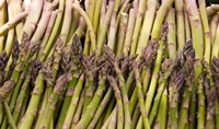 Asparagus, Marlborough, South Island, New Zealand Fine Art Print
