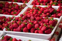 Hydroponic Strawberry Production, Marlborough, South Island, New Zealand by Lee Foster - various sizes