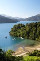 Whenuanui, Becks Bay, Marlborough Sounds, South Island, New Zealand by David Wall - various sizes