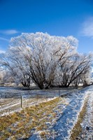 Hoar Frost, Oturehua, South Island, New Zealand by David Wall - various sizes - $32.49