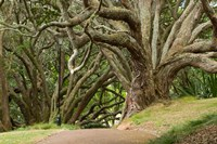 Trees, Central Park, Auckland, New Zealand by Gavriel Jecan - various sizes