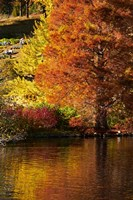 Autumn colour in pond, Botanic Gardens, Dunedin, Otago, South Island, New Zealand by David Wall - various sizes